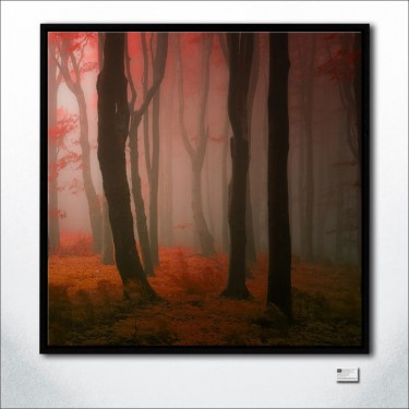 Mahagon Forest