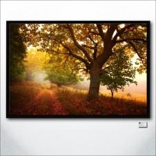 Meditation Of Autumn