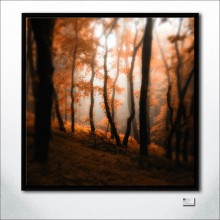 Where Mist Glazing Trees