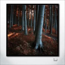 Redwood Stillness At Highnoon