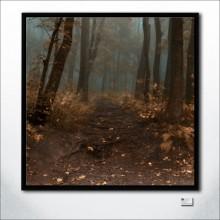 Road To Wisdom Of Autumn